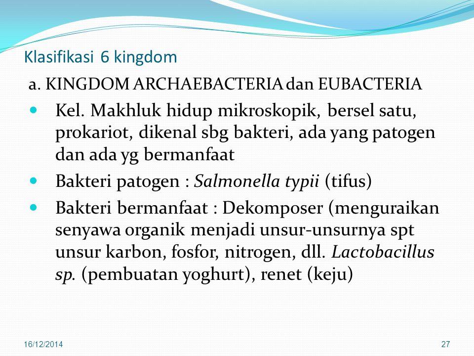 Bakteri patogen : Salmonella typii (tifus)