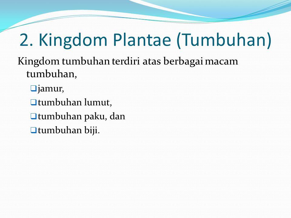 2. Kingdom Plantae (Tumbuhan)