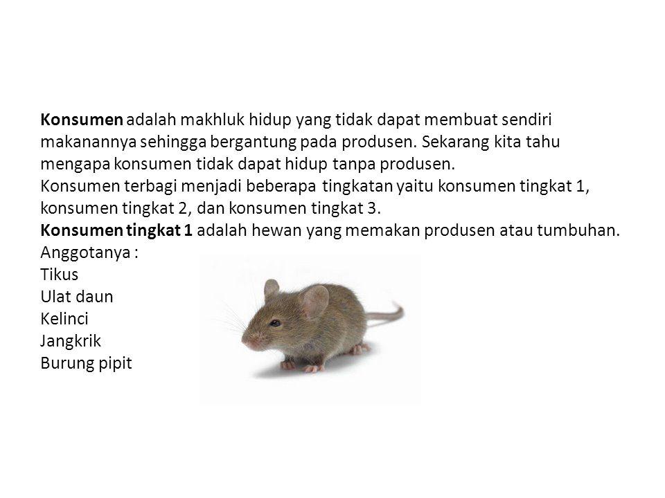 Konsumen adalah makhluk hidup yang tidak dapat membuat sendiri makanannya sehingga bergantung pada produsen.