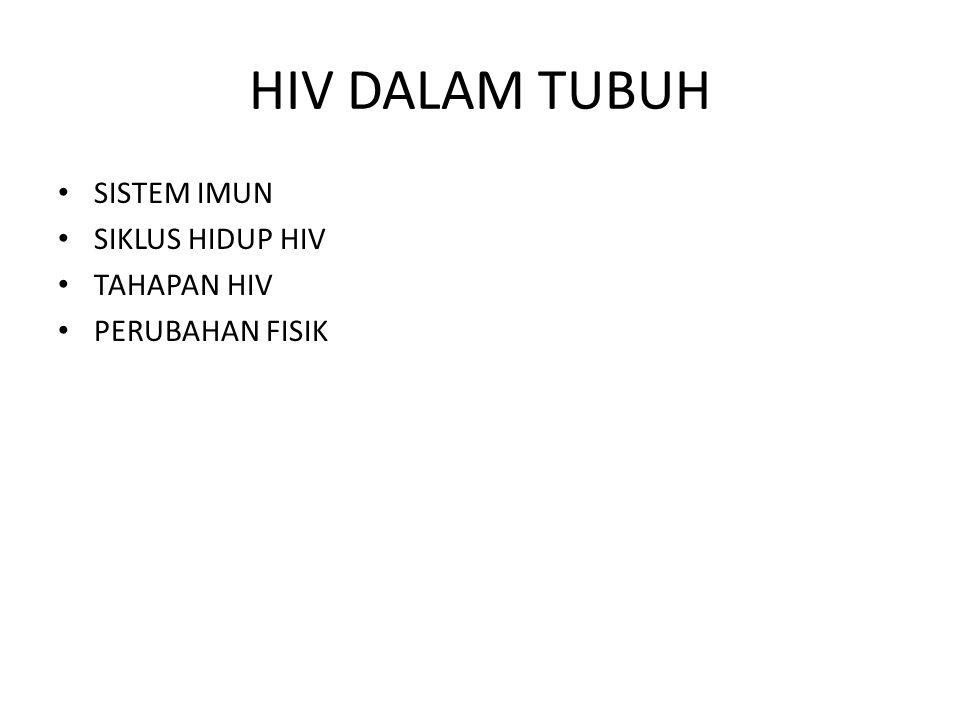 HIV DALAM TUBUH SISTEM IMUN SIKLUS HIDUP HIV TAHAPAN HIV