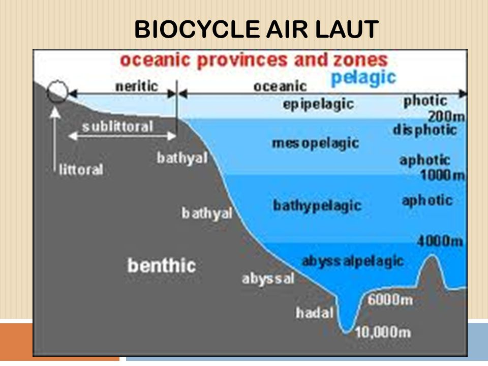 BIOCYCLE AIR LAUT