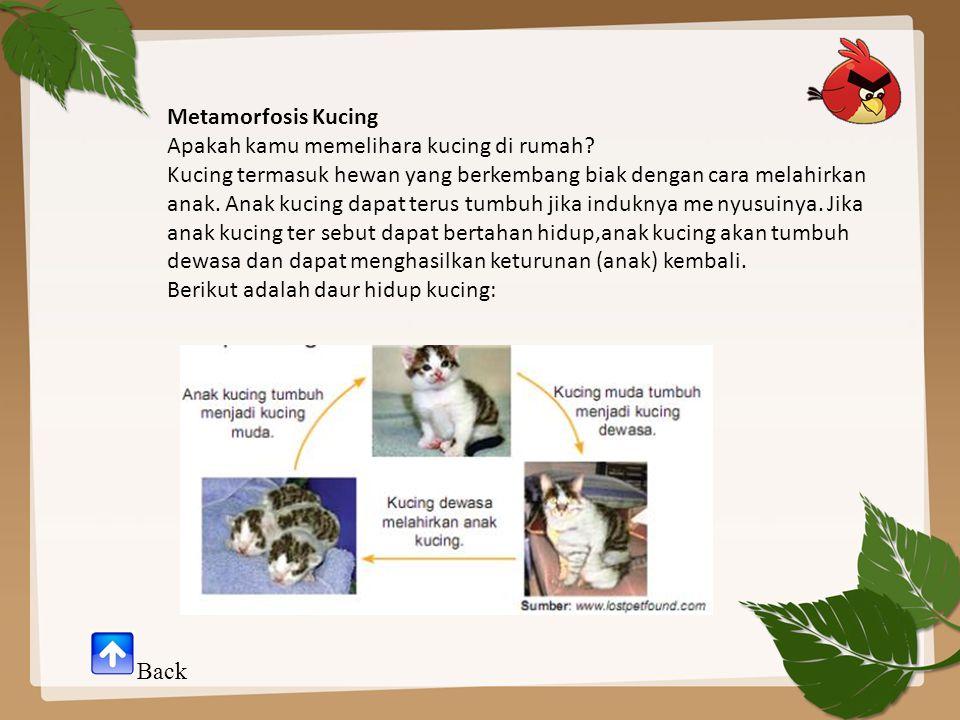 Metamorfosis Kucing Apakah kamu memelihara kucing di rumah