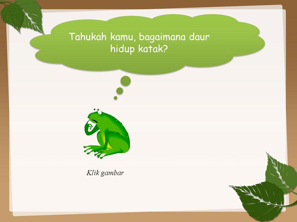 Tahukah kamu, bagaimana daur hidup katak