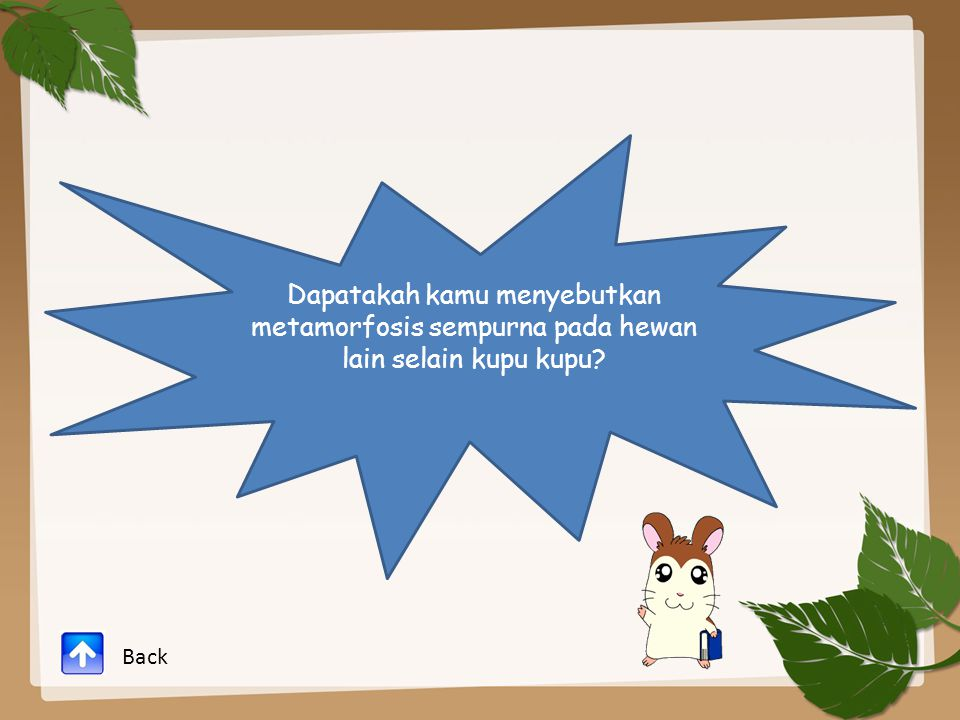 Dapatakah kamu menyebutkan metamorfosis sempurna pada hewan lain selain kupu kupu