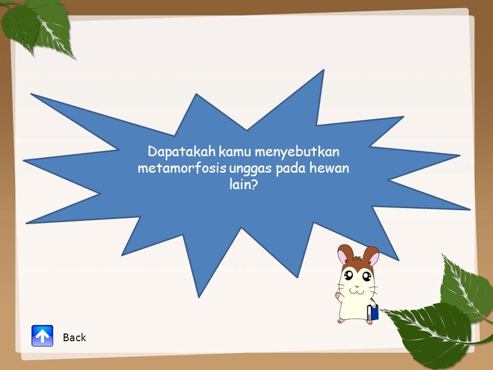 Dapatakah kamu menyebutkan metamorfosis unggas pada hewan lain