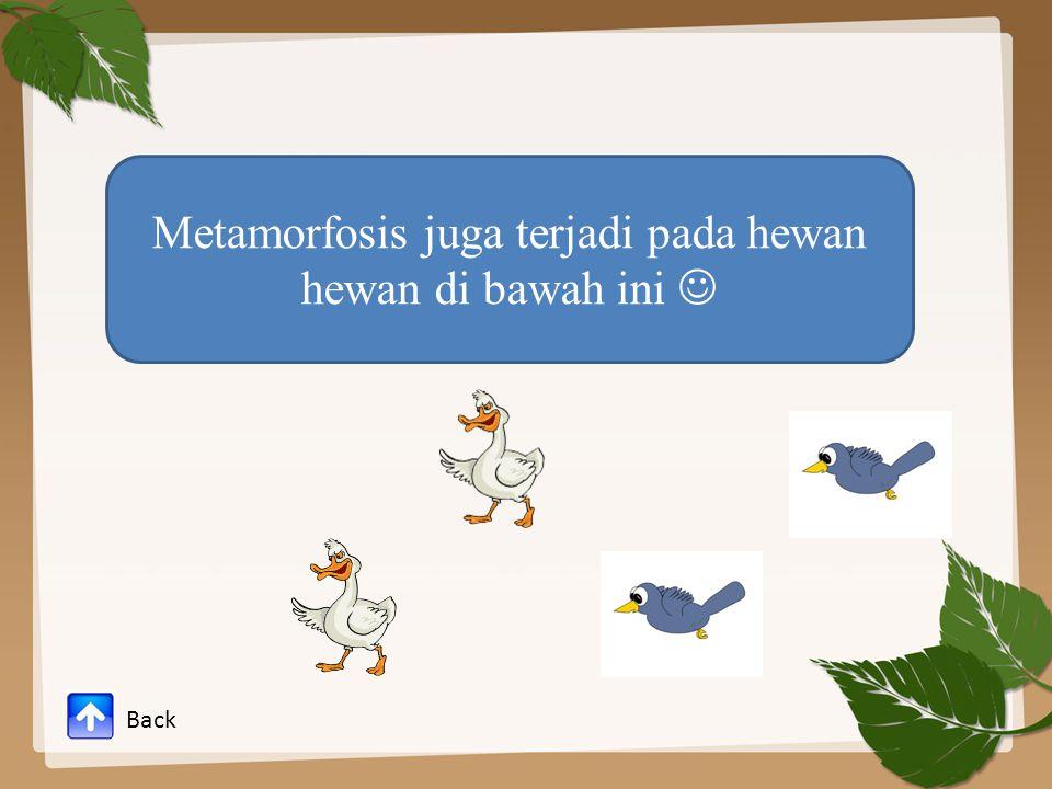 Metamorfosis juga terjadi pada hewan hewan di bawah ini 