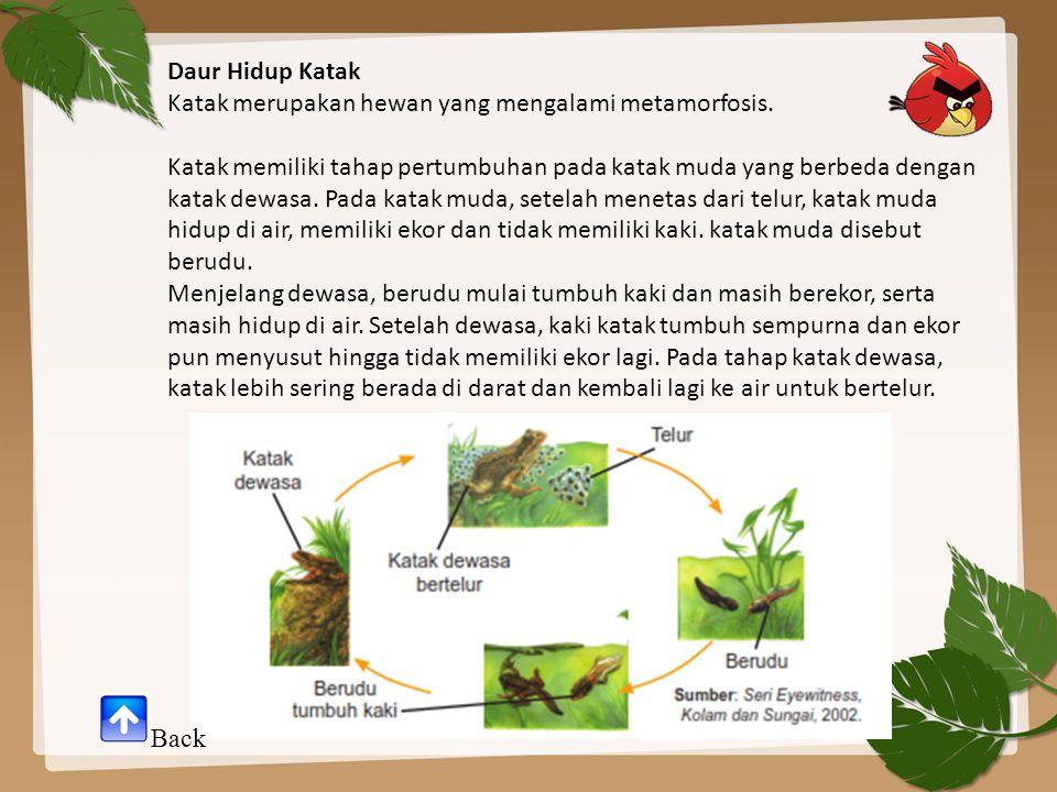 Daur Hidup Katak Katak merupakan hewan yang mengalami metamorfosis.