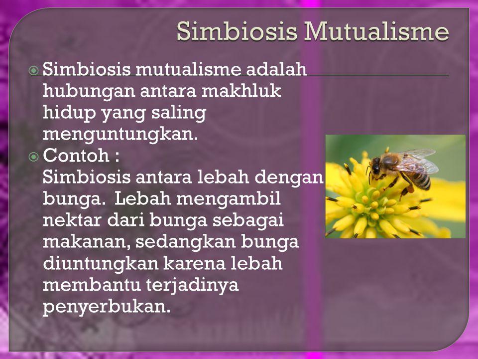 Simbiosis Mutualisme Simbiosis mutualisme adalah hubungan antara makhluk hidup yang saling menguntungkan.