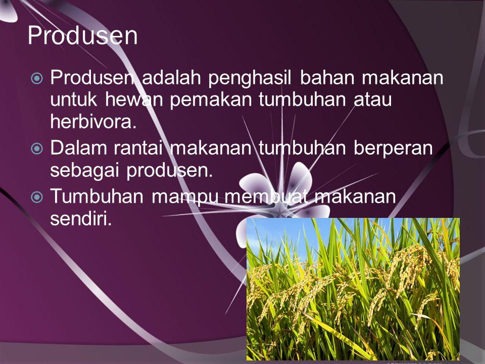 Produsen Produsen adalah penghasil bahan makanan untuk hewan pemakan tumbuhan atau herbivora.
