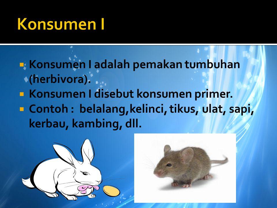 Konsumen I Konsumen I adalah pemakan tumbuhan (herbivora).