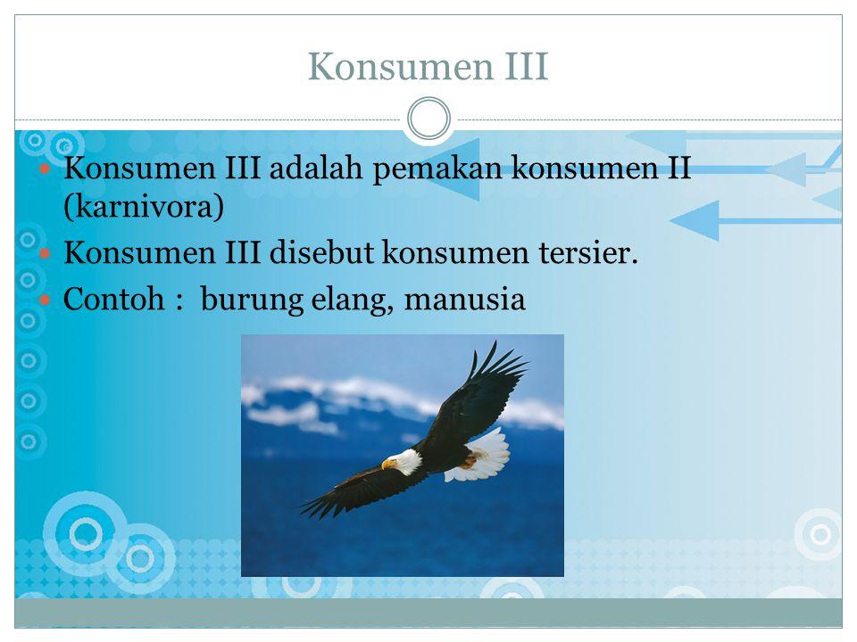 Konsumen III Konsumen III adalah pemakan konsumen II (karnivora)