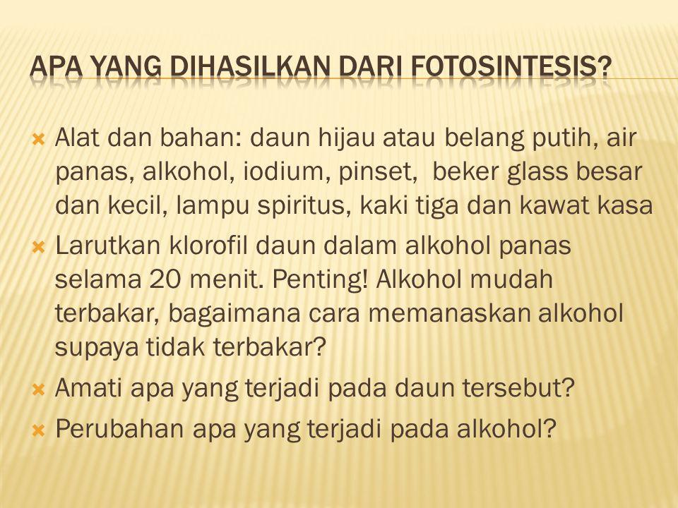 Apa yang dihasilkan dari fotosintesis