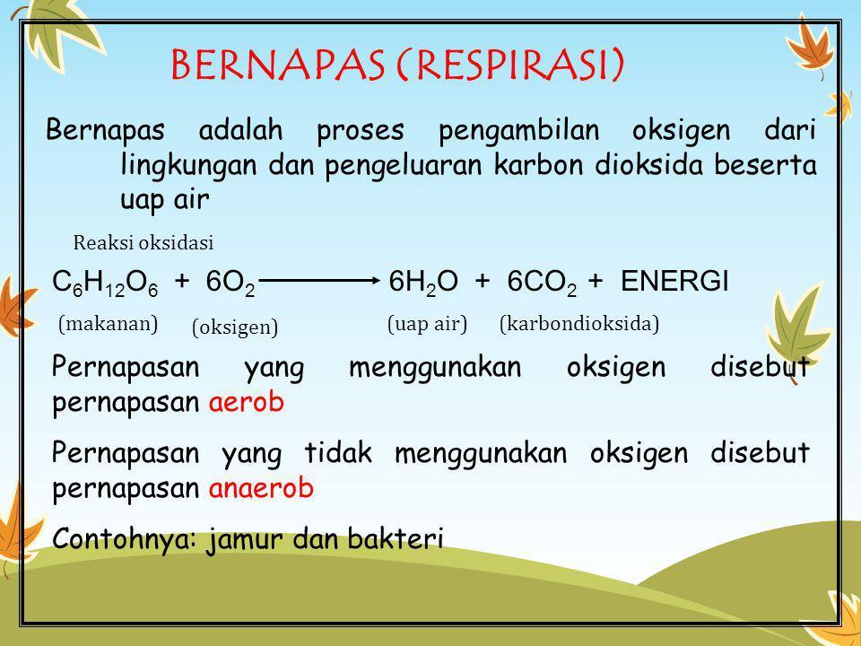 BERNAPAS (RESPIRASI) Bernapas adalah proses pengambilan oksigen dari lingkungan dan pengeluaran karbon dioksida beserta uap air.