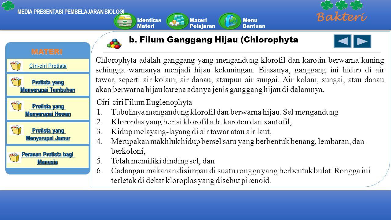 Bakteri b. Filum Ganggang Hijau (Chlorophyta