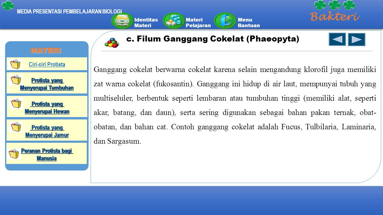 Bakteri c. Filum Ganggang Cokelat (Phaeopyta)