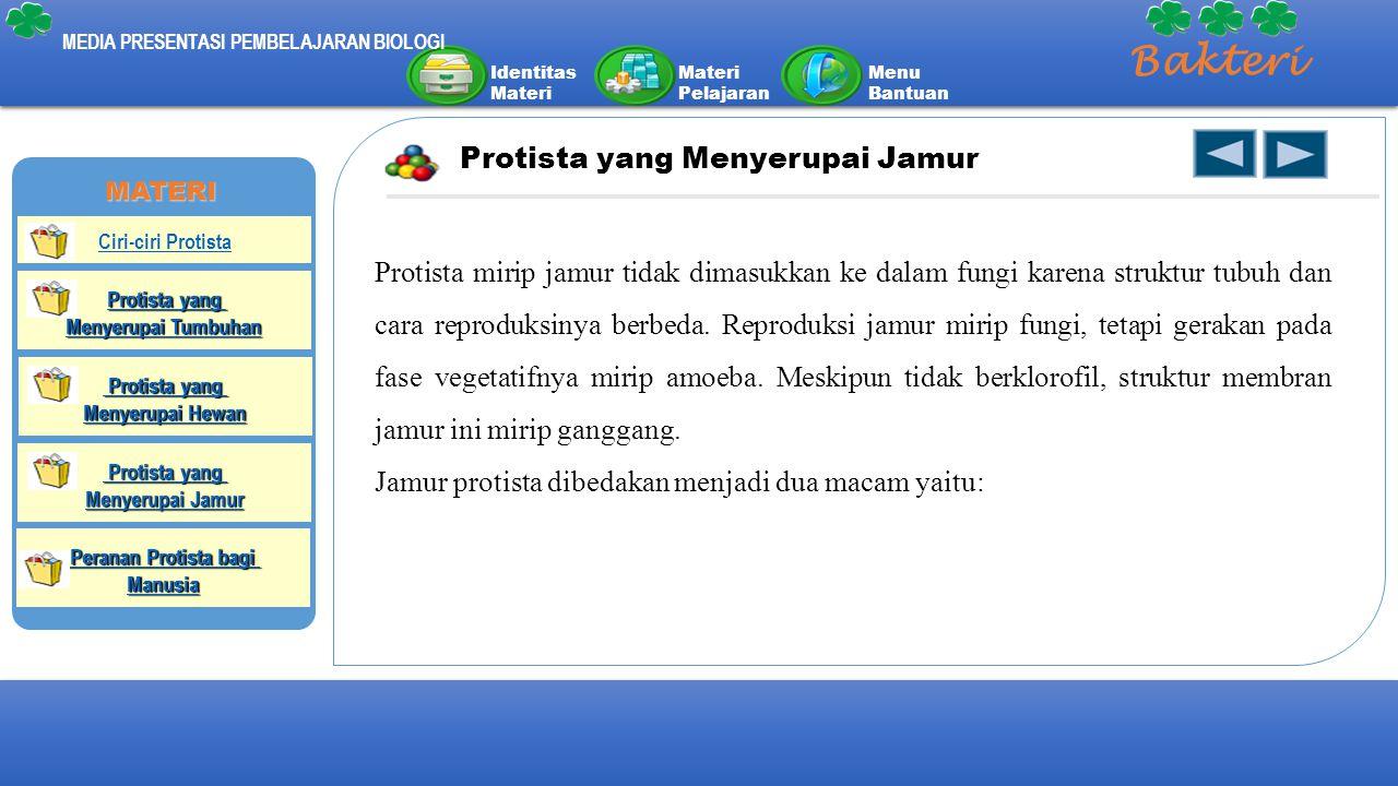 Bakteri Protista yang Menyerupai Jamur