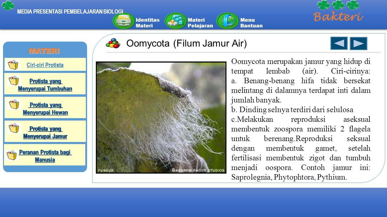 Bakteri Oomycota (Filum Jamur Air)