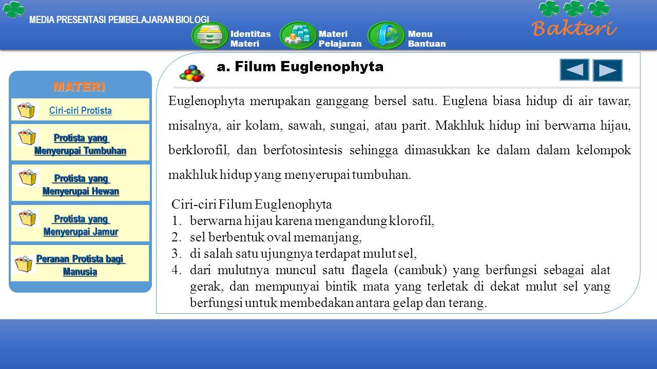Bakteri a. Filum Euglenophyta