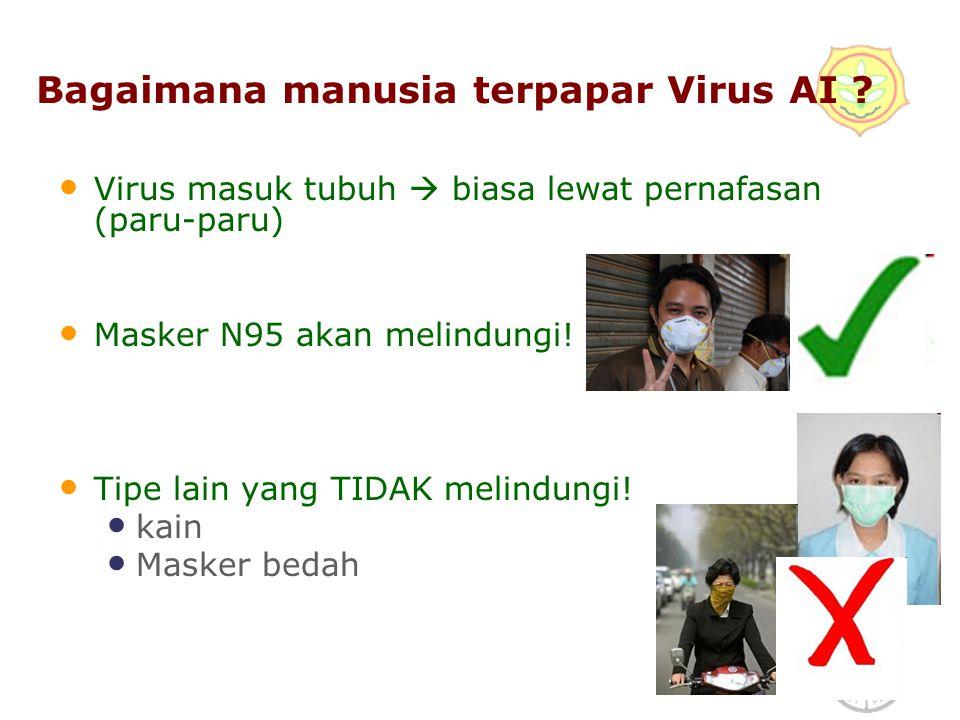 Bagaimana manusia terpapar Virus AI
