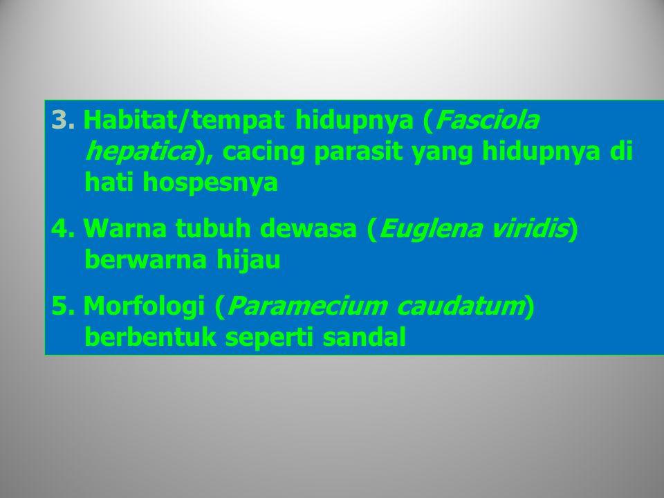 3. Habitat/tempat hidupnya (Fasciola hepatica), cacing parasit yang hidupnya di hati hospesnya