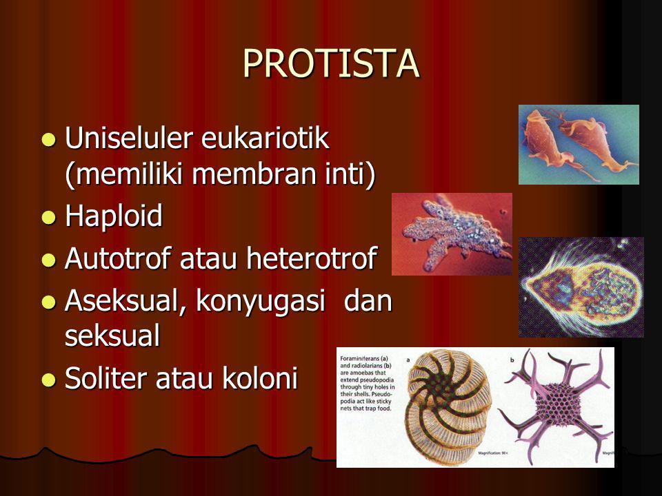 PROTISTA Uniseluler eukariotik (memiliki membran inti) Haploid