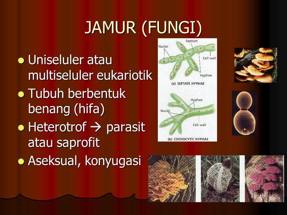 JAMUR (FUNGI) Uniseluler atau multiseluler eukariotik