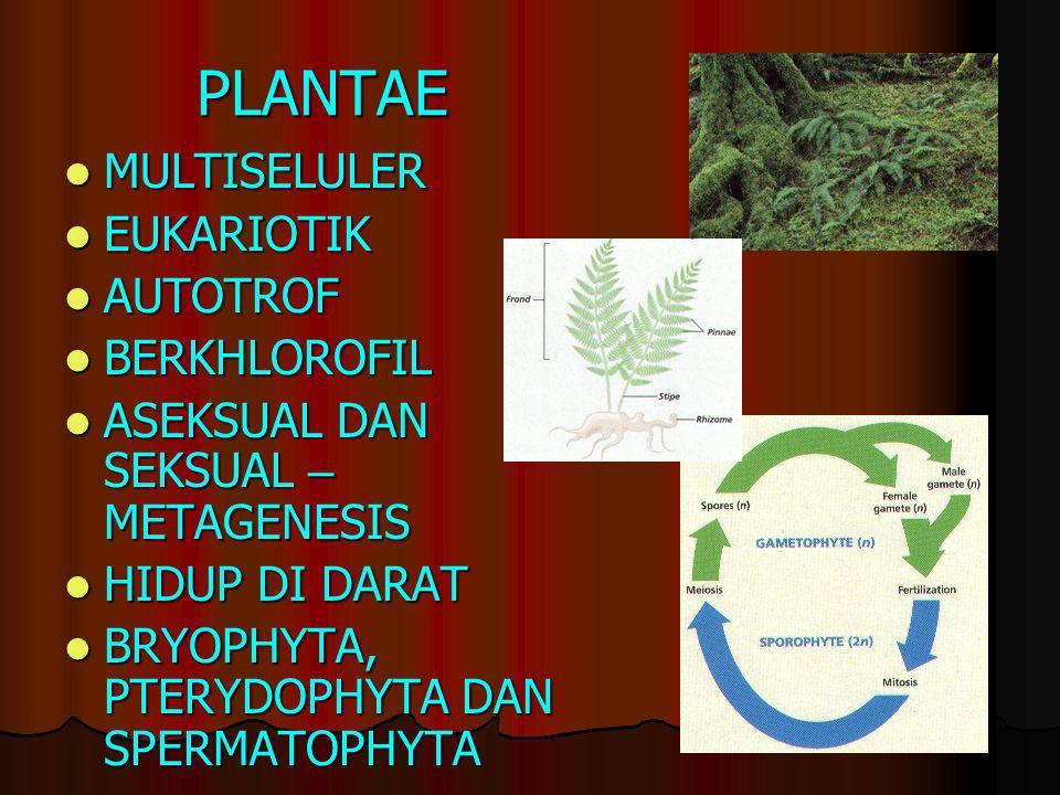 PLANTAE MULTISELULER EUKARIOTIK AUTOTROF BERKHLOROFIL