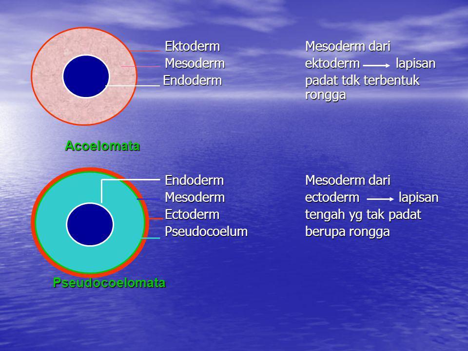 Ektoderm Mesoderm dari