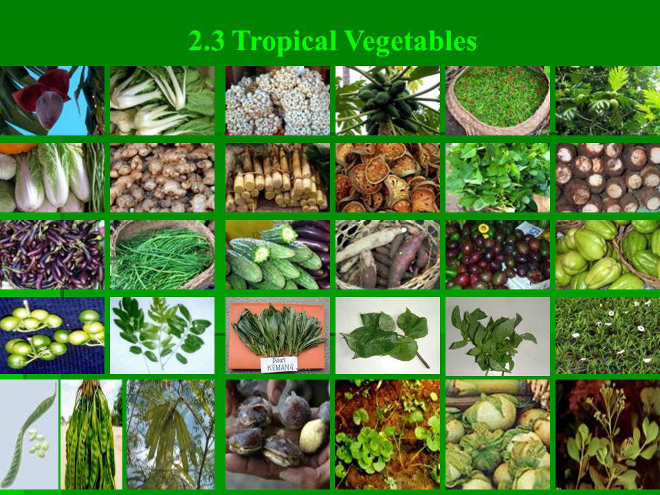 2.3 Tropical Vegetables