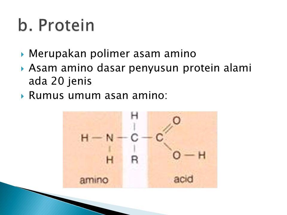 b. Protein Merupakan polimer asam amino