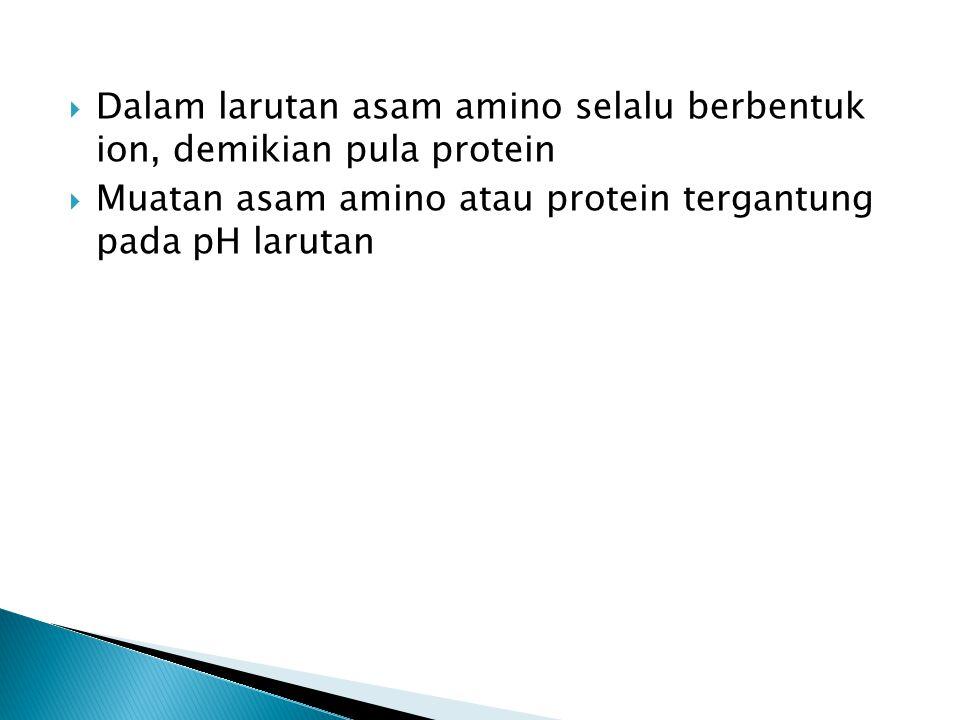 Dalam larutan asam amino selalu berbentuk ion, demikian pula protein