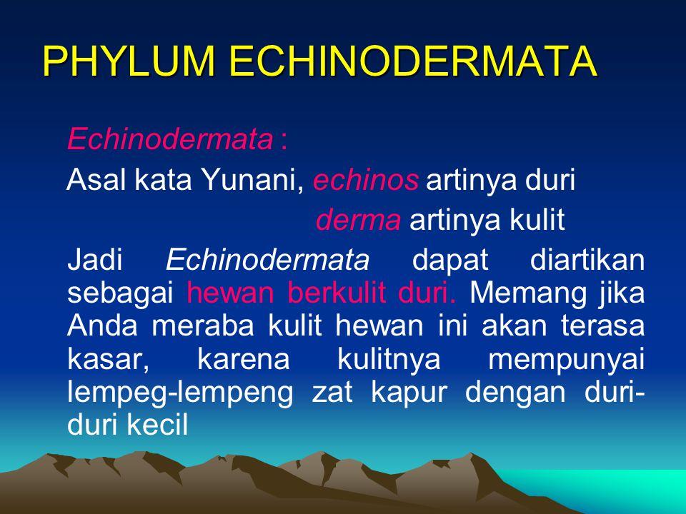 PHYLUM ECHINODERMATA Echinodermata :
