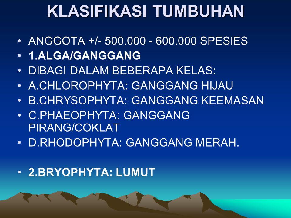 KLASIFIKASI TUMBUHAN ANGGOTA +/- 500.000 - 600.000 SPESIES