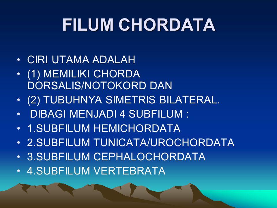 FILUM CHORDATA CIRI UTAMA ADALAH