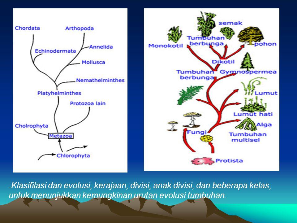 .Klasifilasi dan evolusi, kerajaan, divisi, anak divisi, dan beberapa kelas,