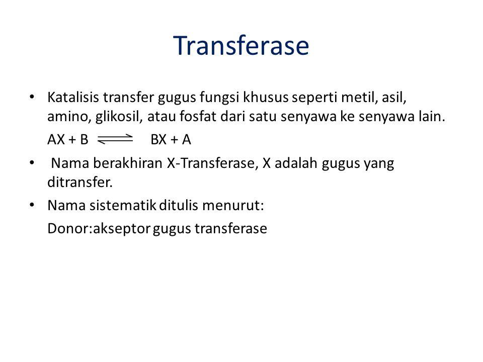 Transferase Katalisis transfer gugus fungsi khusus seperti metil, asil, amino, glikosil, atau fosfat dari satu senyawa ke senyawa lain.