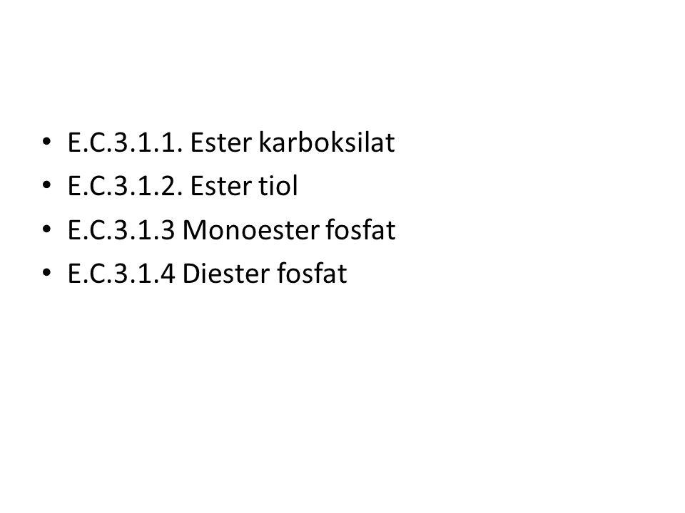 E.C.3.1.1. Ester karboksilat E.C.3.1.2. Ester tiol.