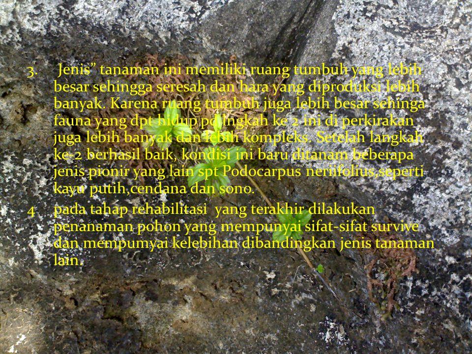 3. Jenis tanaman ini memiliki ruang tumbuh yang lebih besar sehingga seresah dan hara yang diproduksi lebih banyak. Karena ruang tumbuh juga lebih besar sehinga fauna yang dpt hidup pd lngkah ke 2 ini di perkirakan juga lebih banyak dan lebih kompleks. Setelah langkah ke-2 berhasil baik, kondisi ini baru ditanam beberapa jenis pionir yang lain spt Podocarpus neriifolius,seperti kayu putih,cendana dan sono.