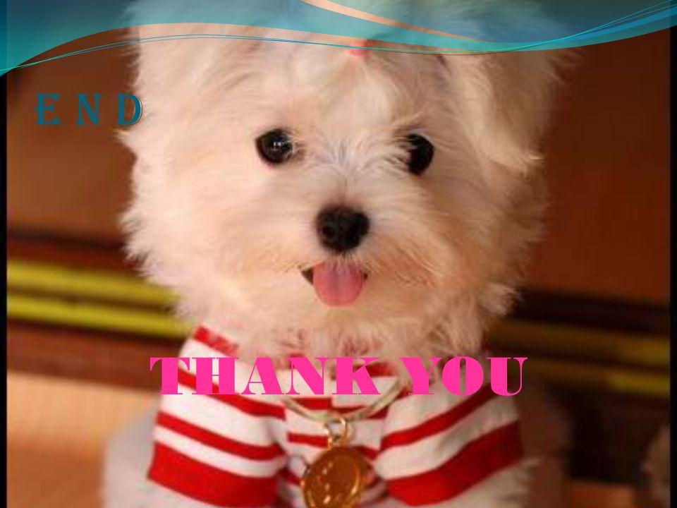 E N D THANK YOU