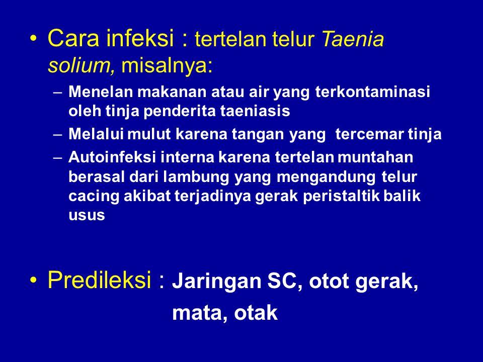Cara infeksi : tertelan telur Taenia solium, misalnya: