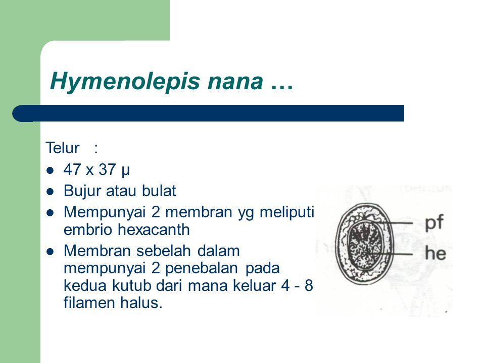 Hymenolepis nana … Telur : 47 x 37 µ Bujur atau bulat