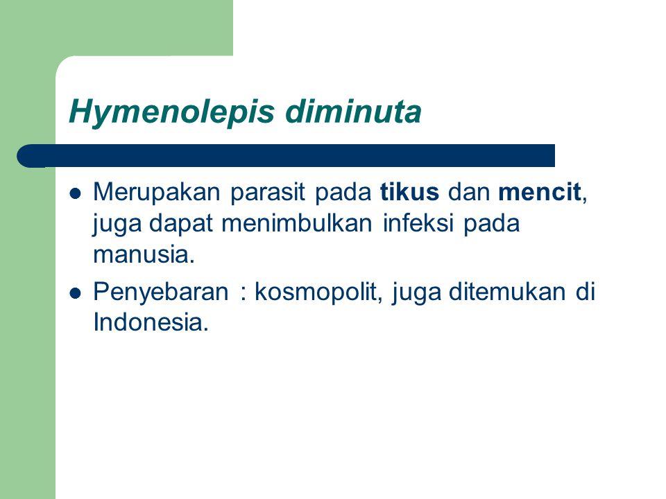 Hymenolepis diminuta Merupakan parasit pada tikus dan mencit, juga dapat menimbulkan infeksi pada manusia.