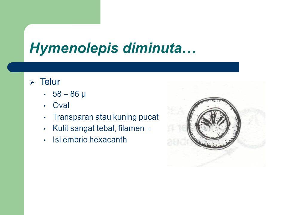 Hymenolepis diminuta…