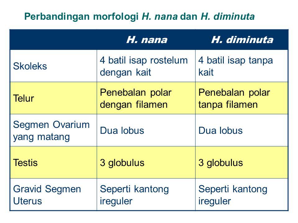 Perbandingan morfologi H. nana dan H. diminuta