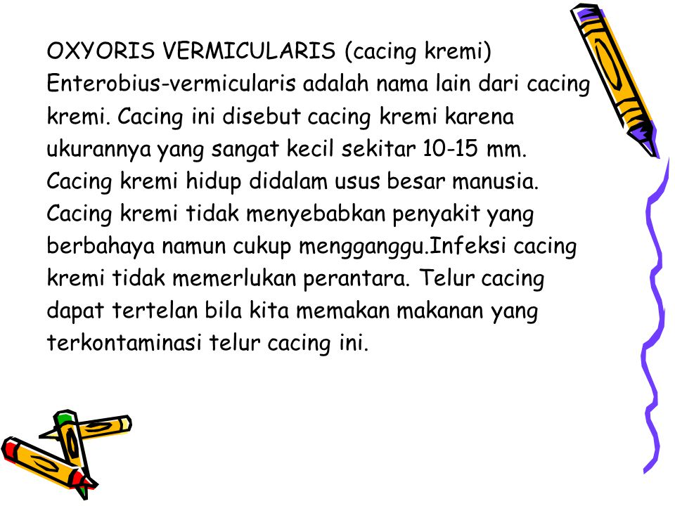 OXYORIS VERMICULARIS (cacing kremi)