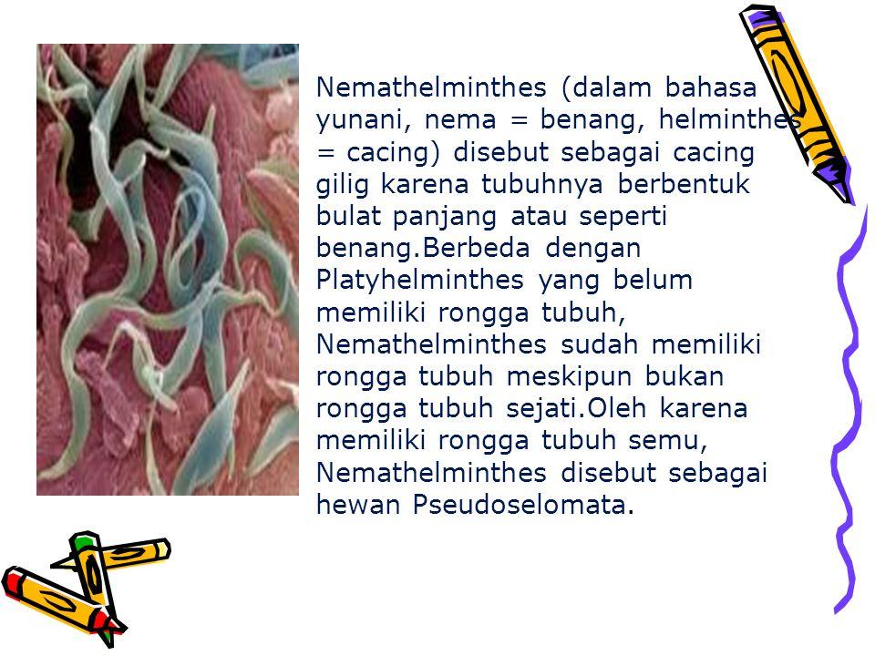Nemathelminthes (dalam bahasa yunani, nema = benang, helminthes = cacing) disebut sebagai cacing gilig karena tubuhnya berbentuk bulat panjang atau seperti benang.Berbeda dengan Platyhelminthes yang belum memiliki rongga tubuh, Nemathelminthes sudah memiliki rongga tubuh meskipun bukan rongga tubuh sejati.Oleh karena memiliki rongga tubuh semu, Nemathelminthes disebut sebagai hewan Pseudoselomata.
