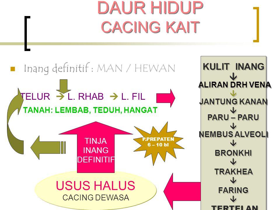 DAUR HIDUP CACING KAIT USUS HALUS Inang definitif : MAN / HEWAN