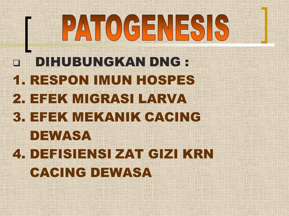 PATOGENESIS DIHUBUNGKAN DNG : 1. RESPON IMUN HOSPES