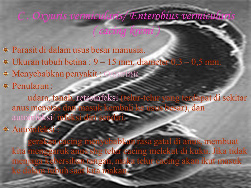 C . Oxyuris vermicularis/ Enterobius vermicularis ( cacing kremi )