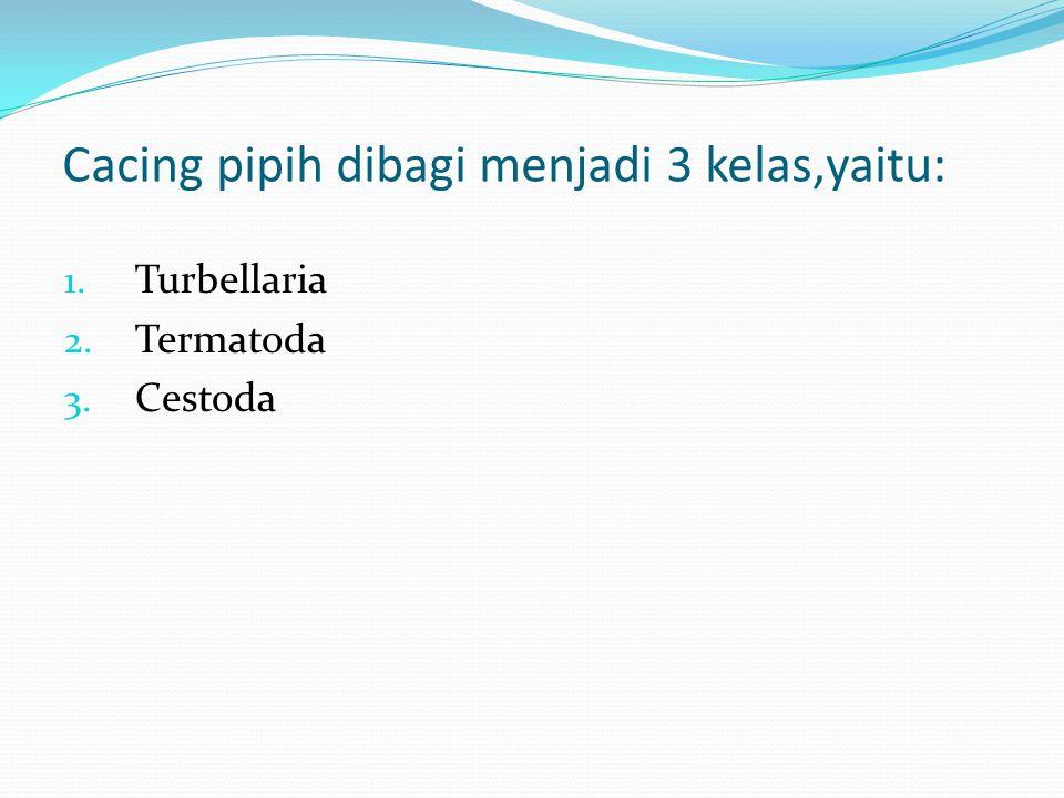 Cacing pipih dibagi menjadi 3 kelas,yaitu: